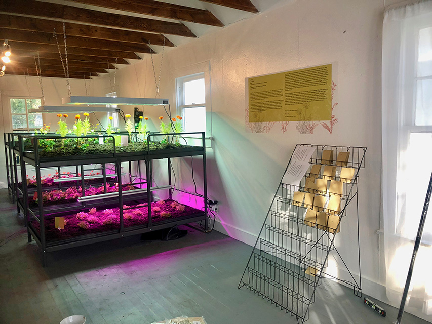 Installation shot at PRH 48, the growing beds mimic the language of a prison dorm room restructured to grow the flowers chosen by the incarcerated Mothers. Seed rack contains the same seeds for visitors to plant in their homes and gardens.