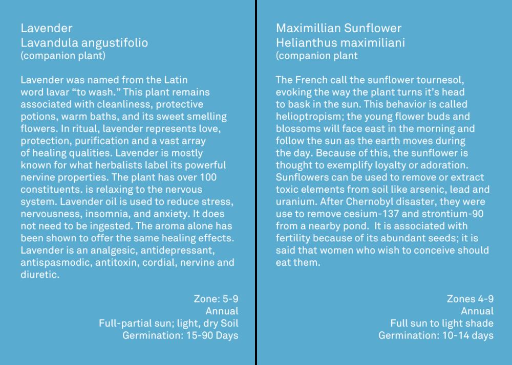 flower descriptions 8.png