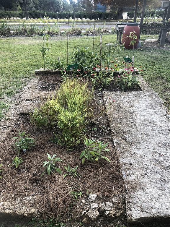Mike's garden in December 2018