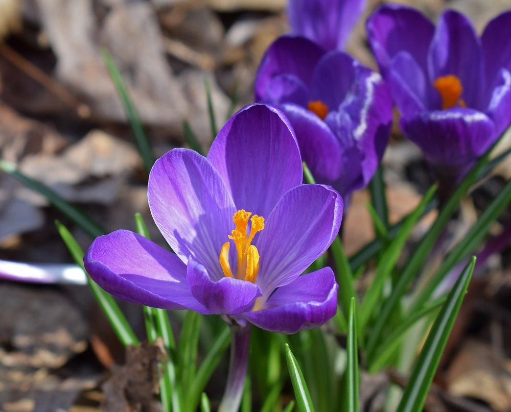 beautiful-bloom-blooming-355955.jpg