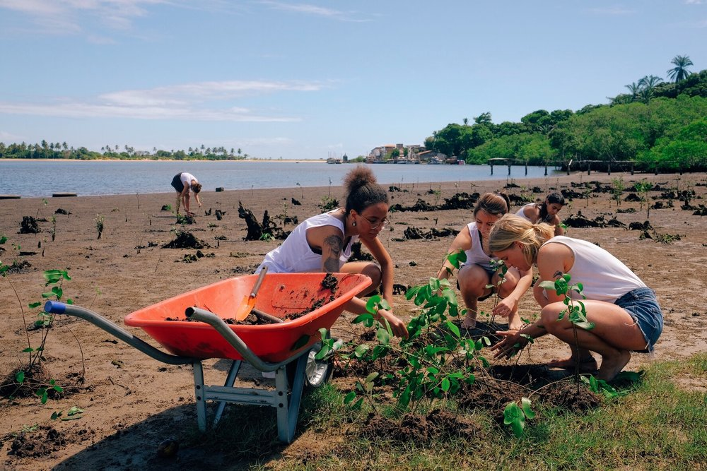 "ETIV volunteers plant mangroves on the banks of the ""Contas River"", in Itacaré, Bahia"