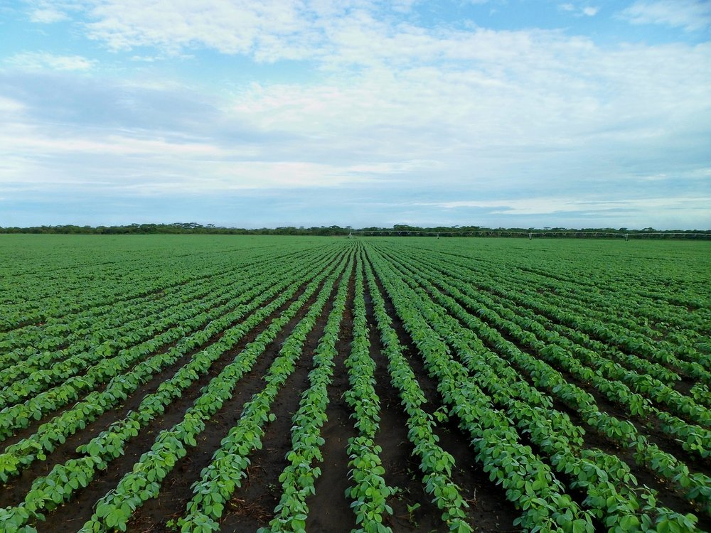 soybean-field-1610754_1280.jpg