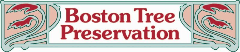 Boston Tree Preservation