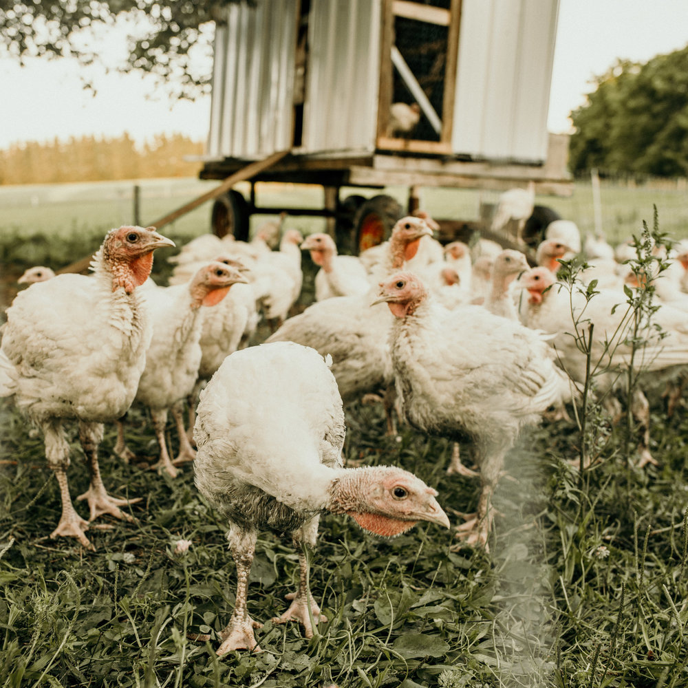 5-Chicks-August-2018-044.jpg