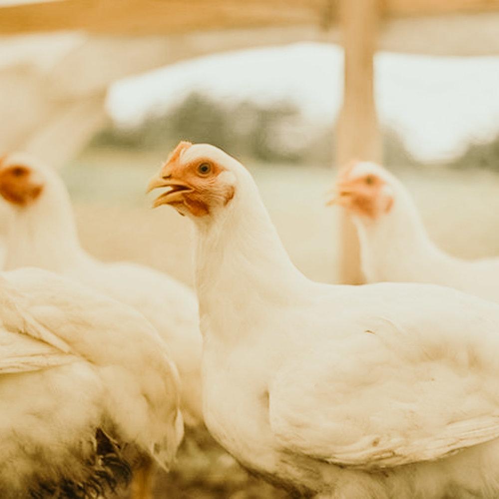 5-Chicks-More-hounds-onraw-009.jpg