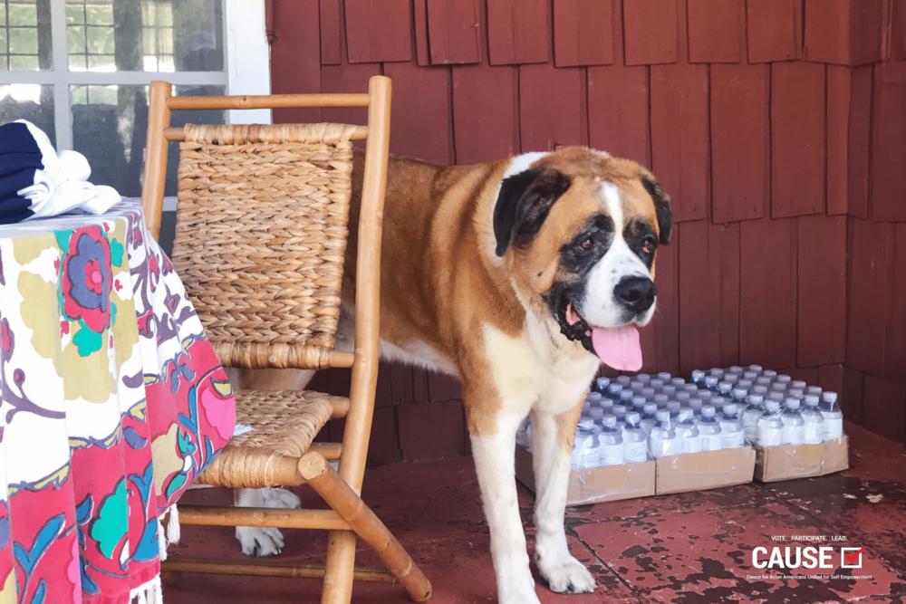 Assemblymemer Holden's dog, Jackson
