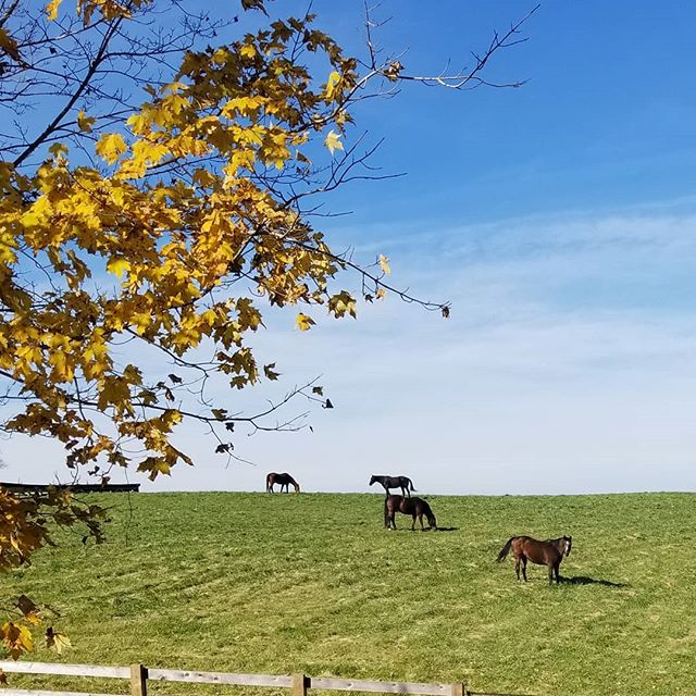 As I was pulling out of our driveway, I turned to look over our front pasture and had to capture this. Fall has finally arrived and we are loving it!  This is a view that I will never grow tired of.