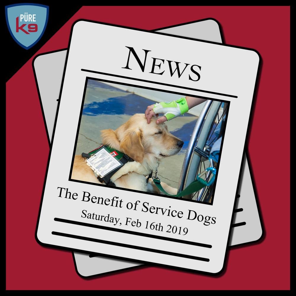 DIN-Logo_Service-Dogs.png