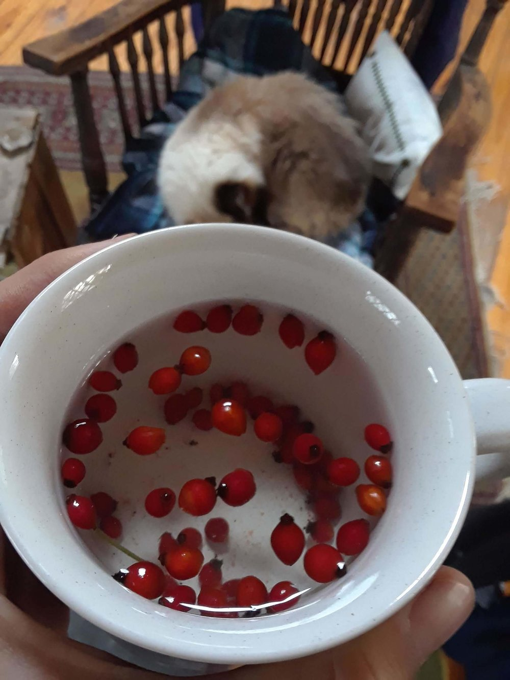 Rosehip tea from multiflora rose right outside. Thank for keeping us healthy!