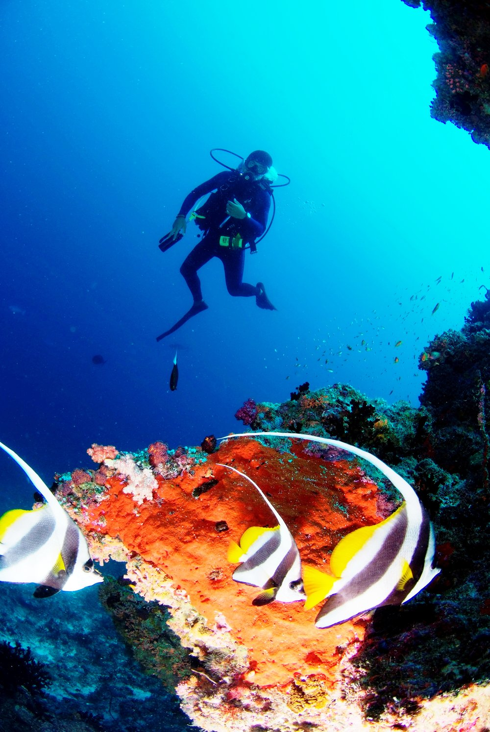 Anantara_Dhigu_Diving.JPG