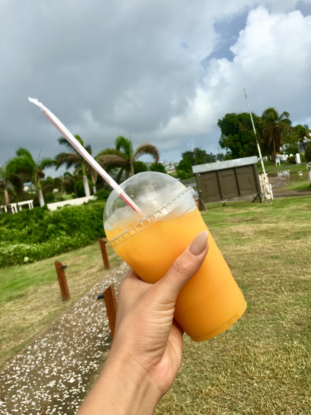 Fresh mango juice - A locally owned coffee shop grows mangos behind the shop to make fresh mango juice every morning.