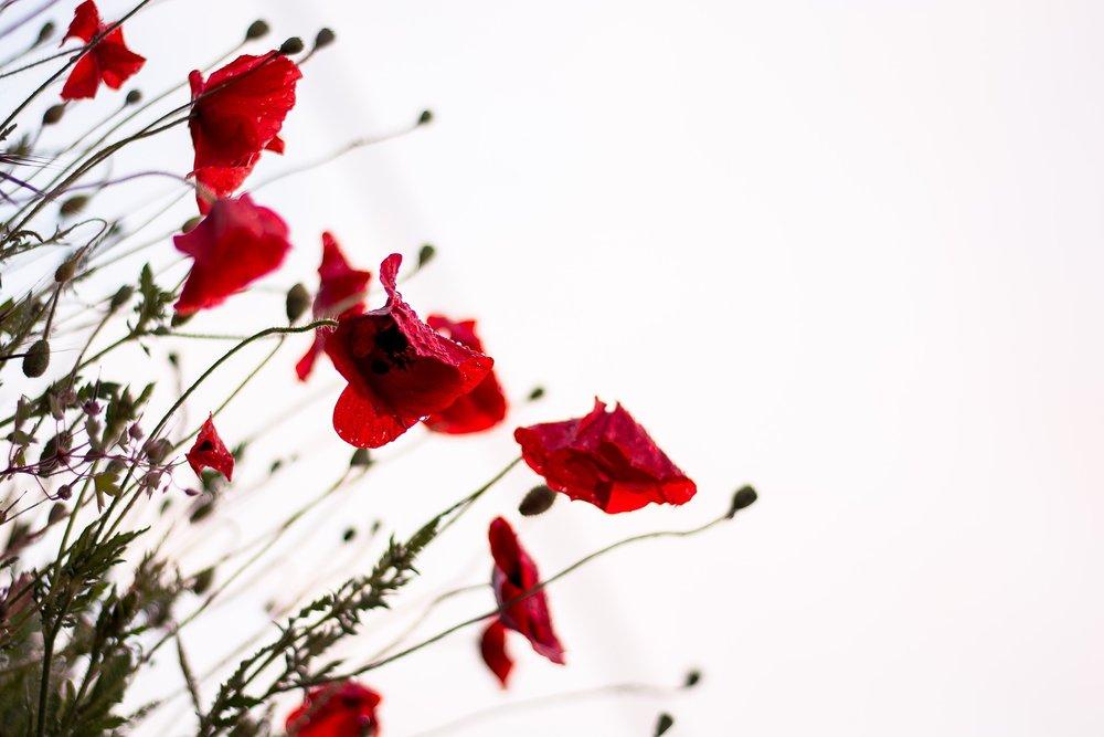 bloom-1838337_1920.jpg