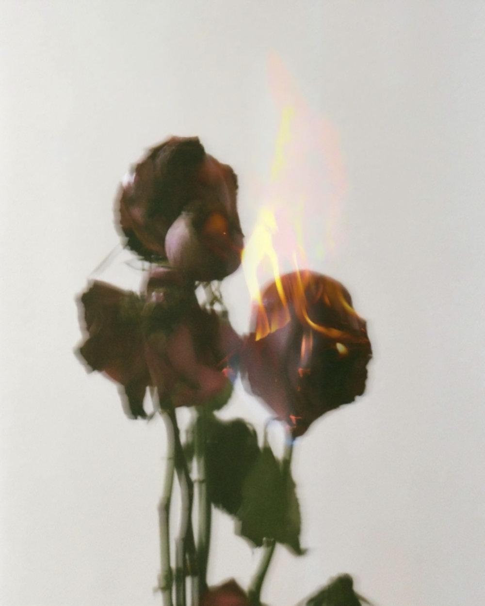 burningrose-magic.jpg