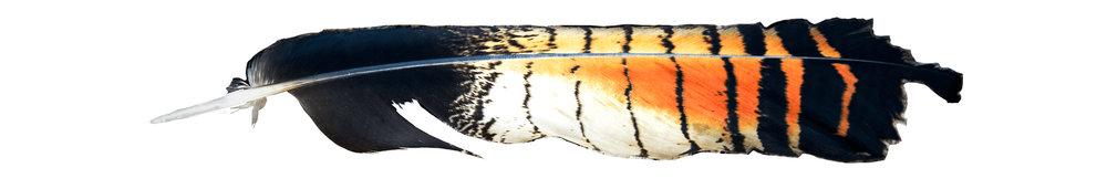 feather2.jpg