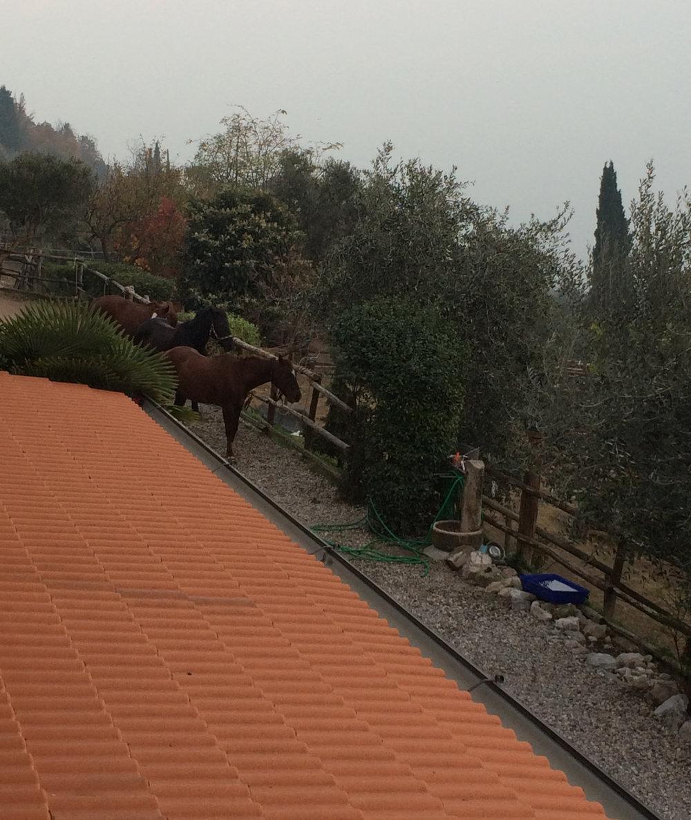 the-horses-of-scuderia.jpg