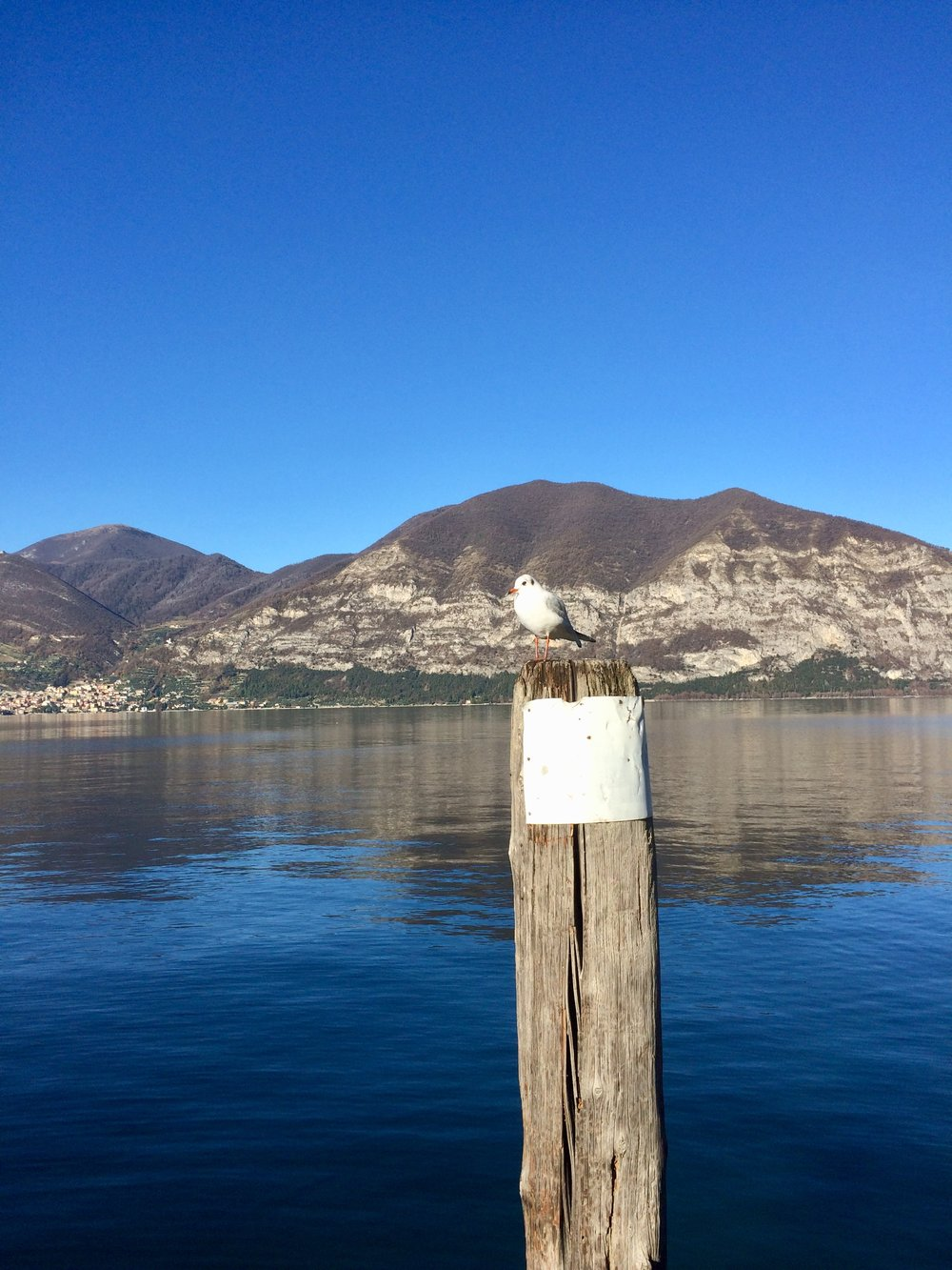 the-seagoul-iseo.jpg