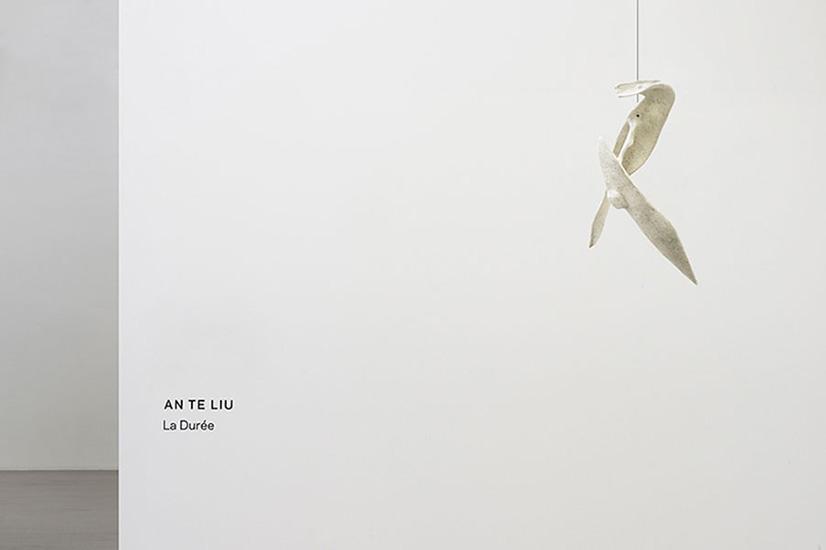 ANL11 (2).jpg