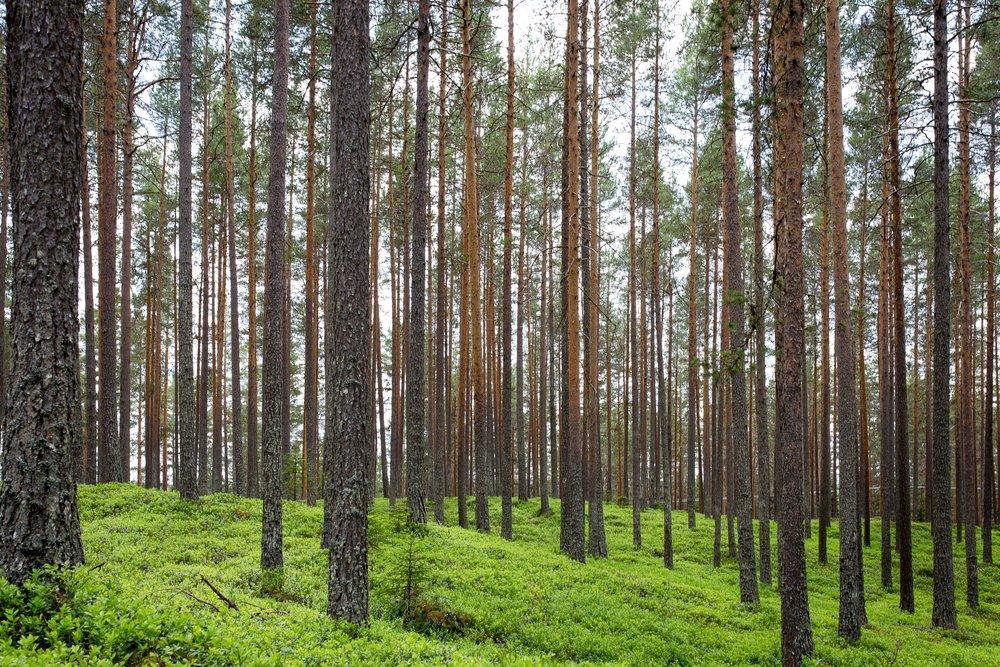 100 000 stromů. Tolik jich vysadíme v českých lesích. - Myslíme si, že je naší povinností postarat se o planetu. Nabízíme dostupné řešení, které pomáhá odhalovat skutečný stav znečištění ovzduší a jeho zdroje, ale uvědomujeme si, že je důležité být ohleduplný a starostlivý ještě více. V perfect-Air pracujeme na snižování uhlíkové stopy a jako jeden ze závazků společenské zodpovědnosti a pro udržitelné životní prostředí, jsme se rozhodli, že do 10 let vysadíme v českých lesích 100 000 stromů.#lepsiplaneta