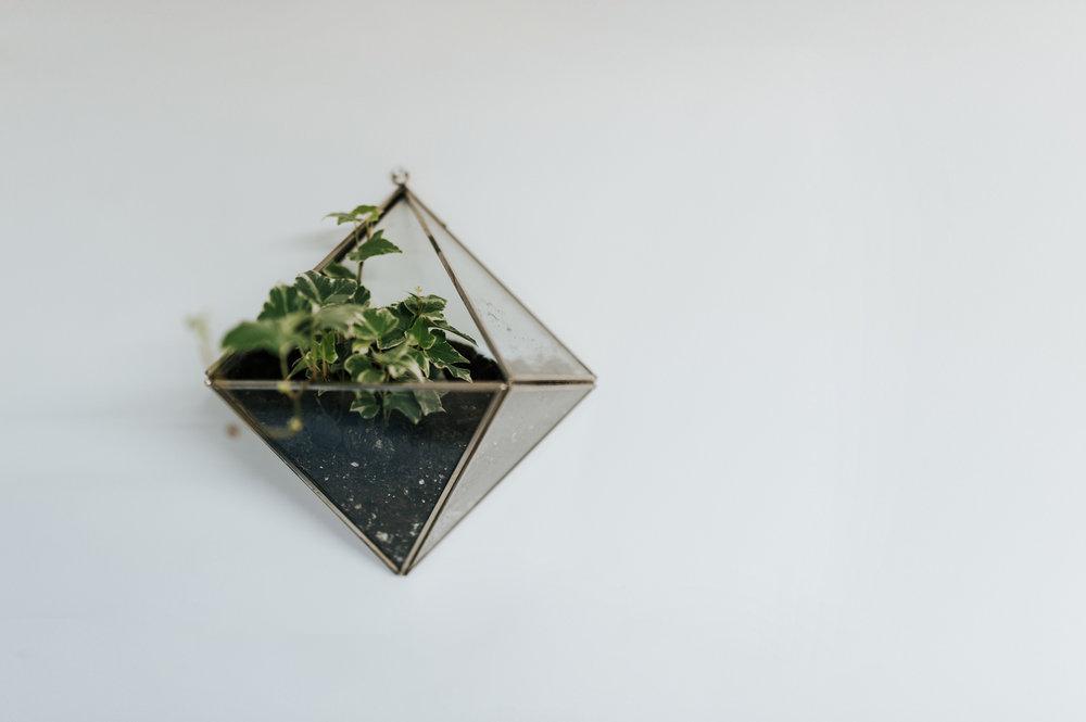 Terrarium Inspiration