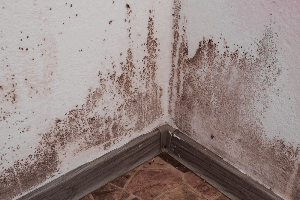 MOLD & CONTAMINATION - Mold damage often follows storms, burst pipes, and seemingly innocuous   damp areas. However, mold should not be underestimated, as it can cause serious health issues.