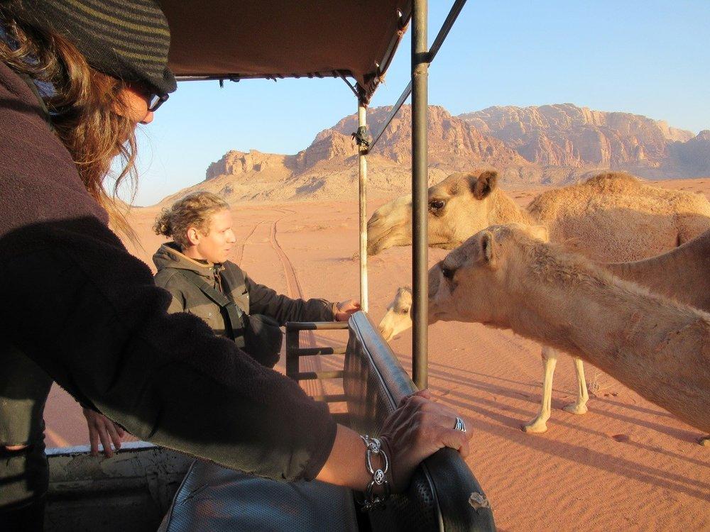 pet camels.jpg