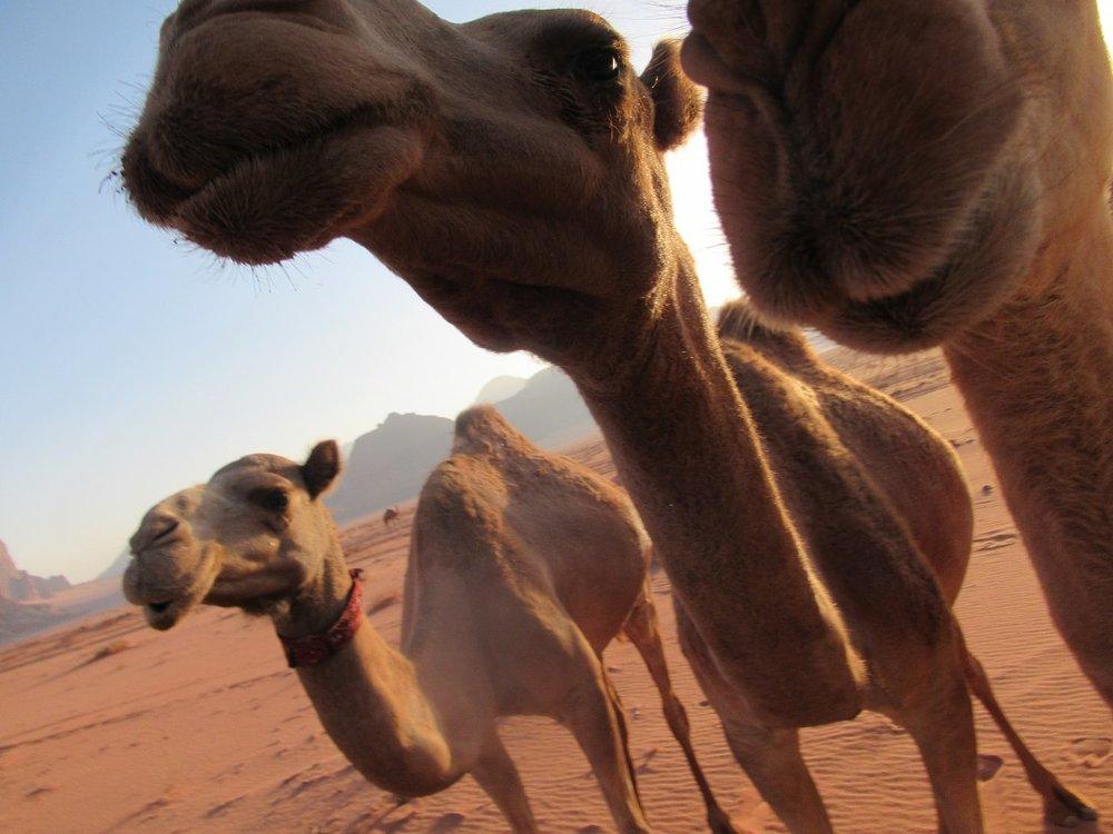 camel talk 2.jpg