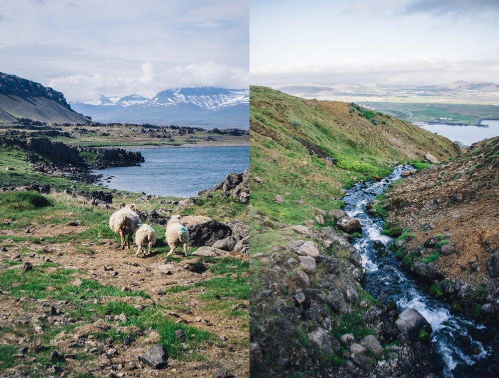 Iceland-collage.jpg