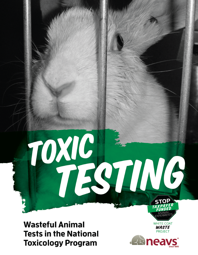 Toxic_Testing_report_cover.png
