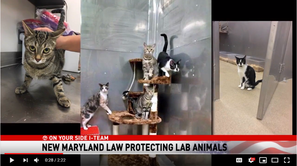 """We want to offer them that better option. Now it's the law. We are pretty sure they will want to comply...and respect the will of Maryland voters."" On ABC7, watch us weigh in on a new law that requires the USDA to make an effort to adopt out healthy kittens instead of killing them in their labs."
