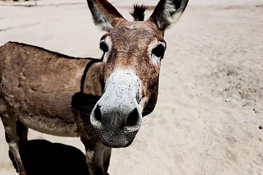 Different trip, same horse #burro
