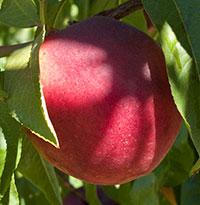 organic fruit 1.jpg