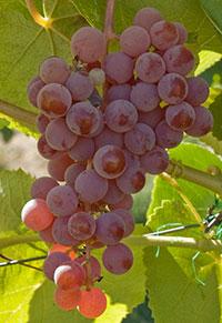 organic fruit 2.jpg