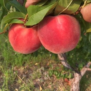 organic fruit3.JPG