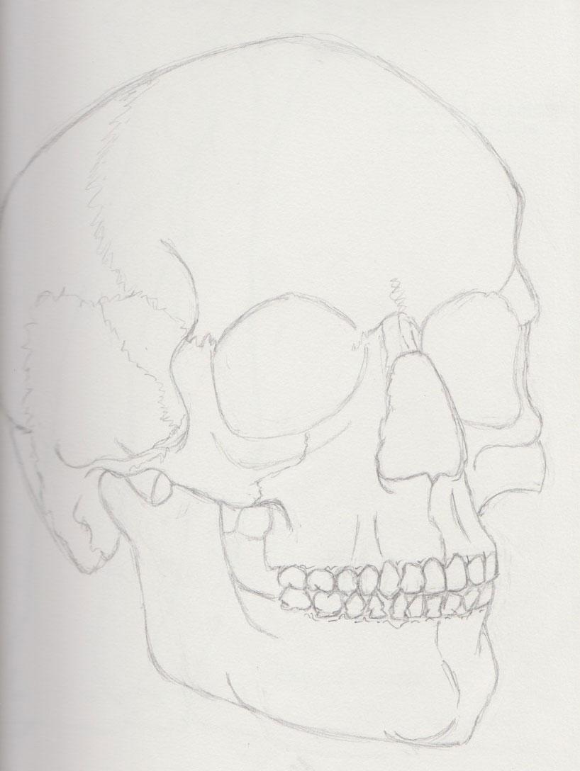 Human Skull Anatomy Study
