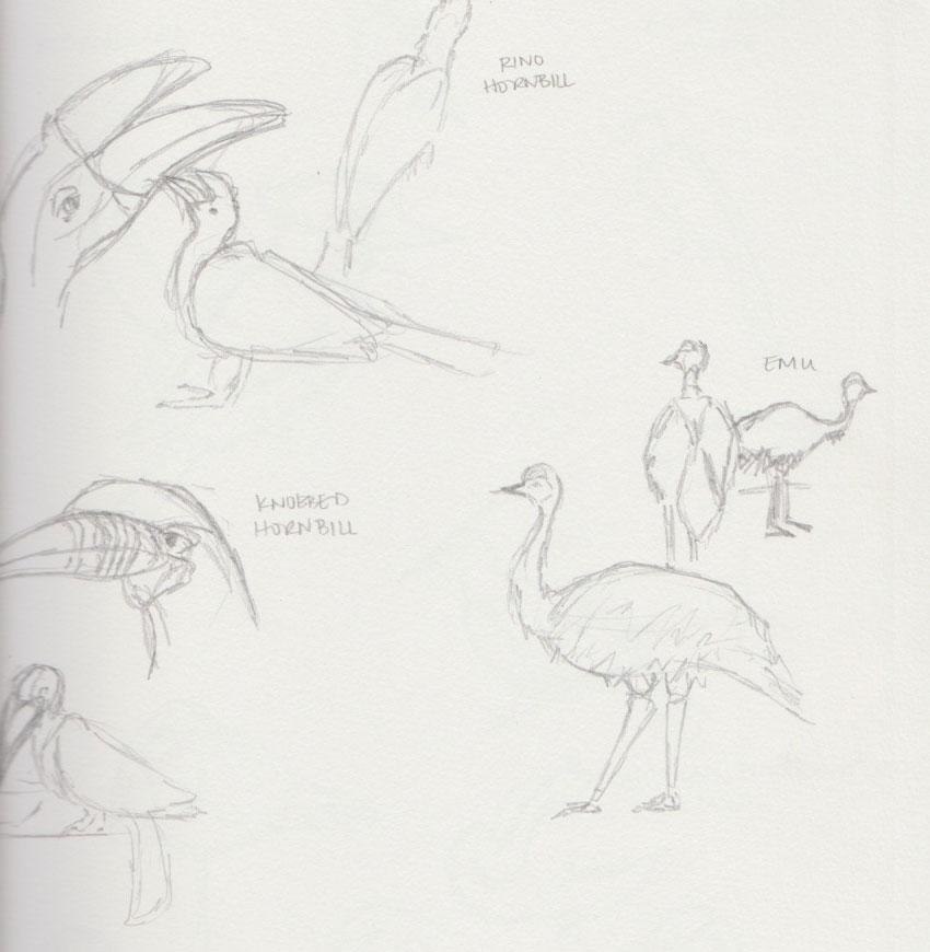 Large Bird Zoo Animal Sketches