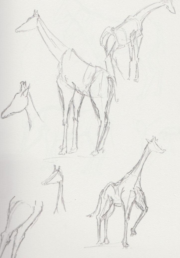 Giraffe Zoo Animal Sketches