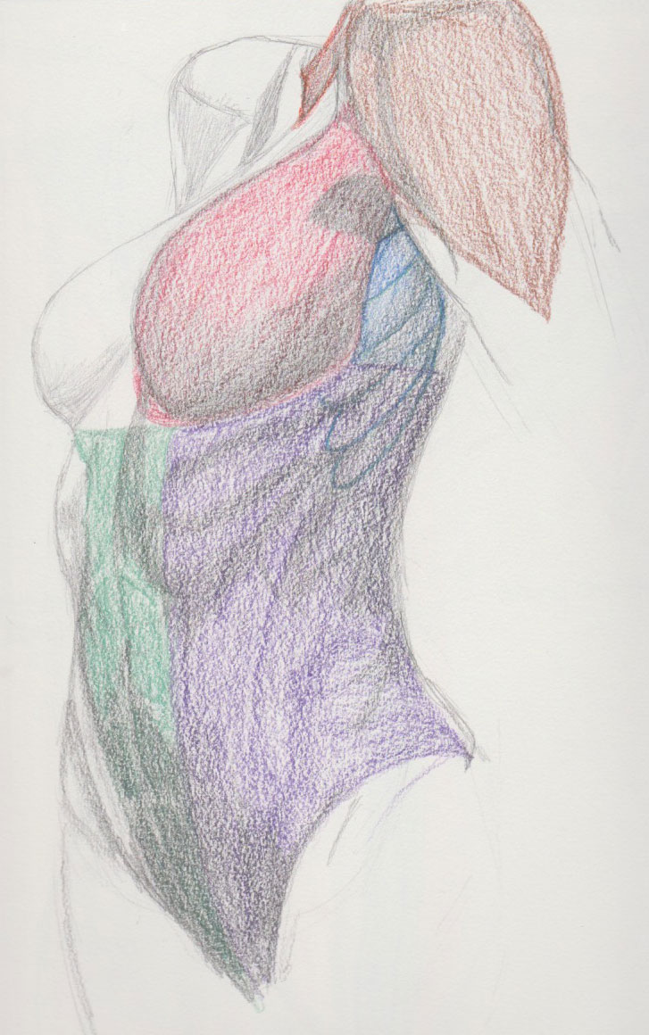 Female Torso Anatomy Study