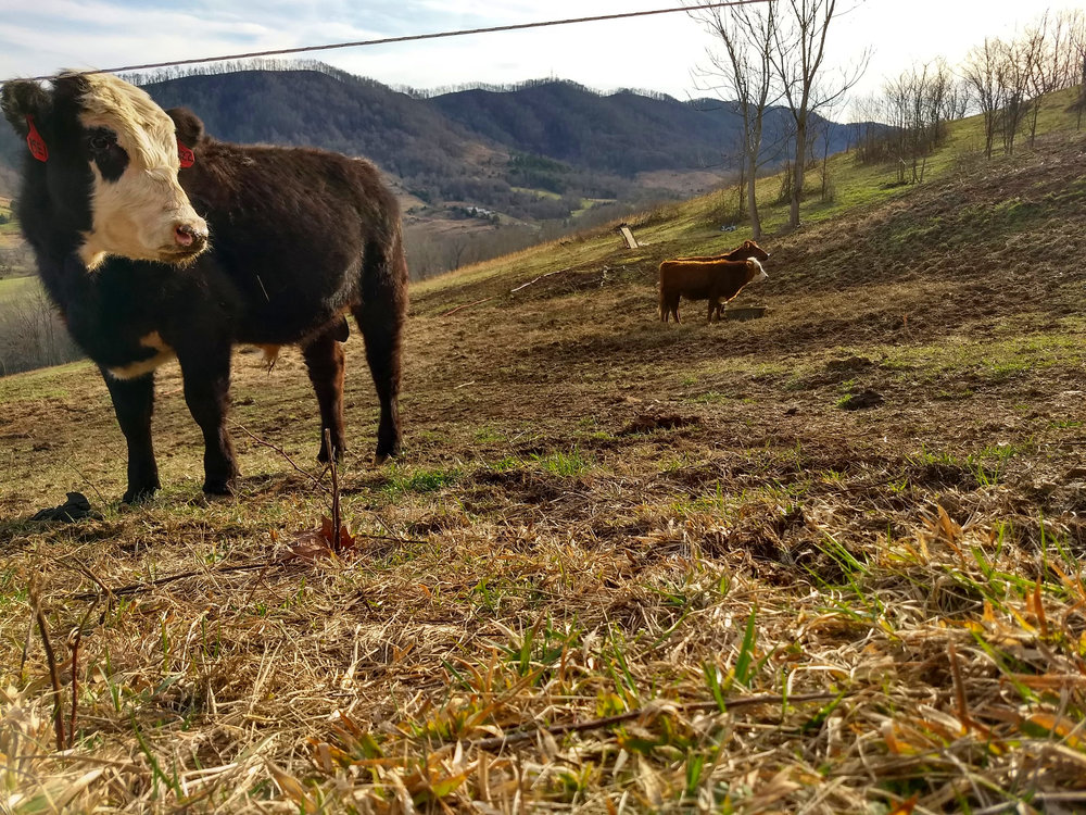 Enjoy the the Spring… - Well, That is the update from your farm. We are going to be getting Spring Beef started too! We will keep you up to date with everything. I hope you all enjoyed this update and have a wonderful week.Your Ararat Farm