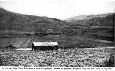 """Food for Victory. Original caption reads: """"A year ago these Utah fields were a mass of sagebrush. Thanks to Japanese Americans, they are now acres of vegetables."""""""