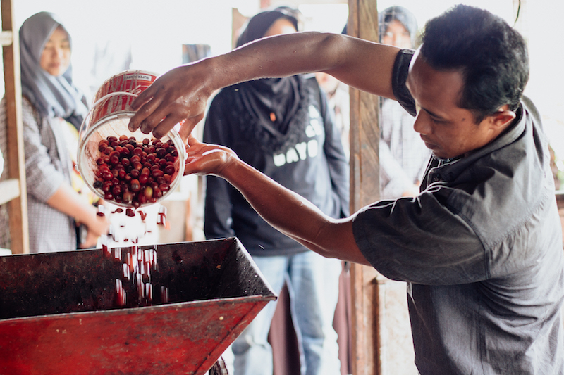 Cherry pulping in Gayo. This bucket is the unit by which pickers are paid.