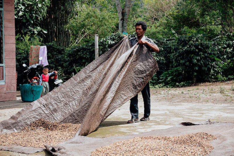 Turning coffee on a tarp to dry in the sun.