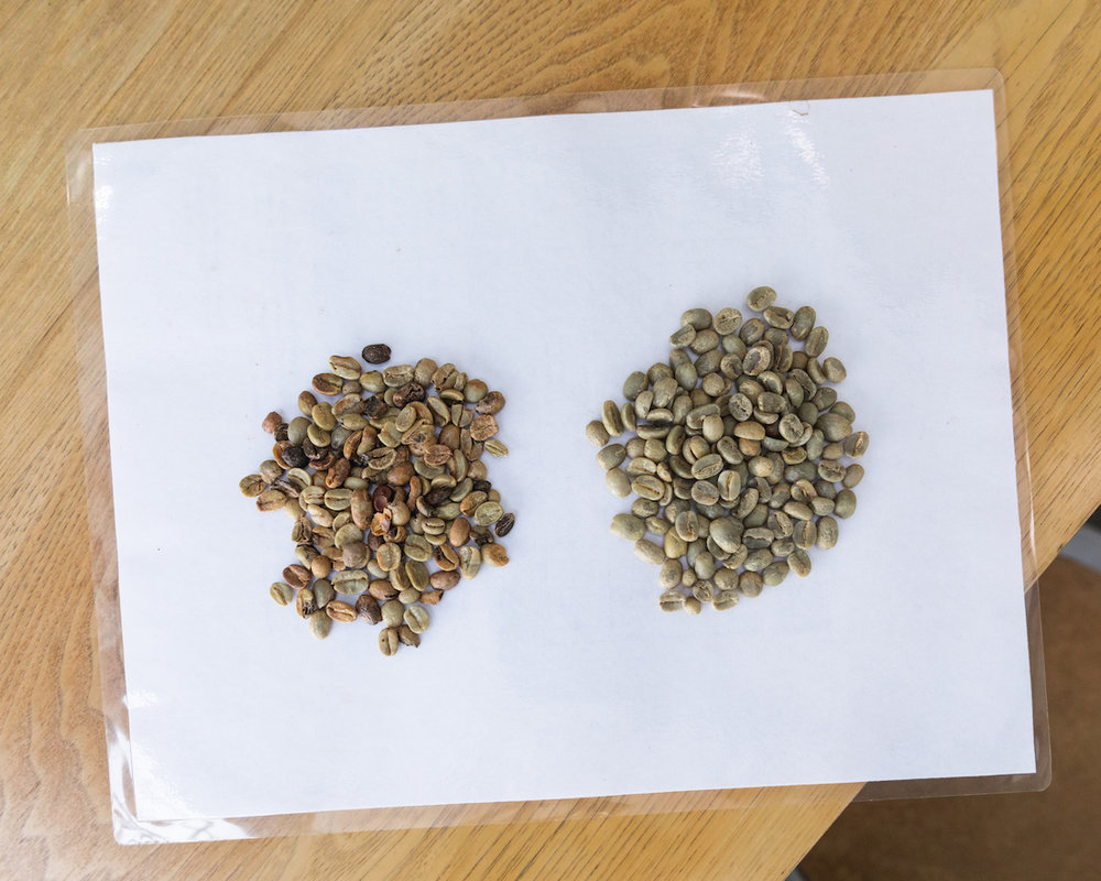 Two green coffee samples