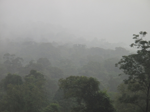 The mist settling over Khao Yai National Park; one of the parks protected where Surviving Together protect and monitor.