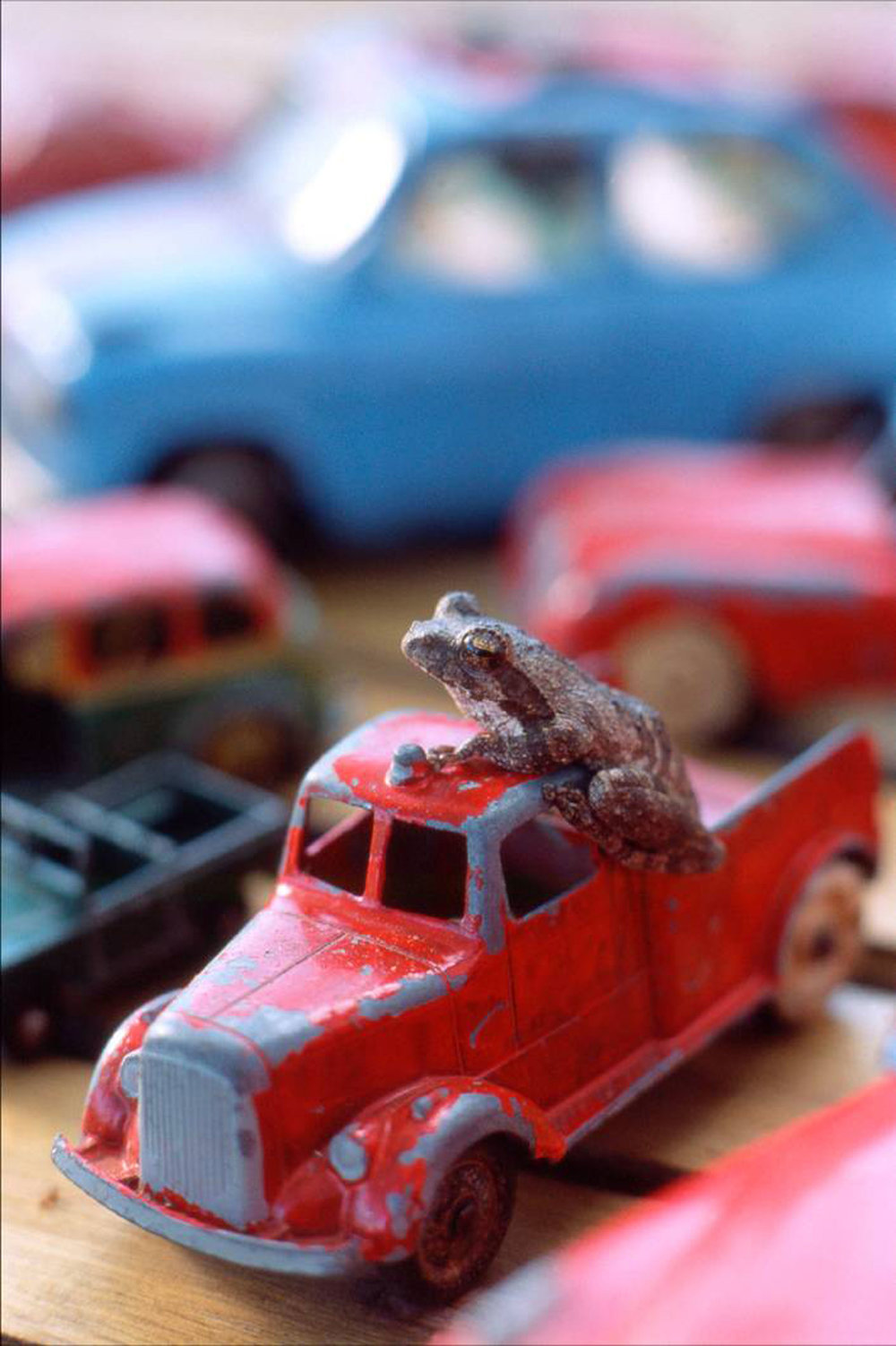 Ngala-Tented---Car-with-frog.jpg