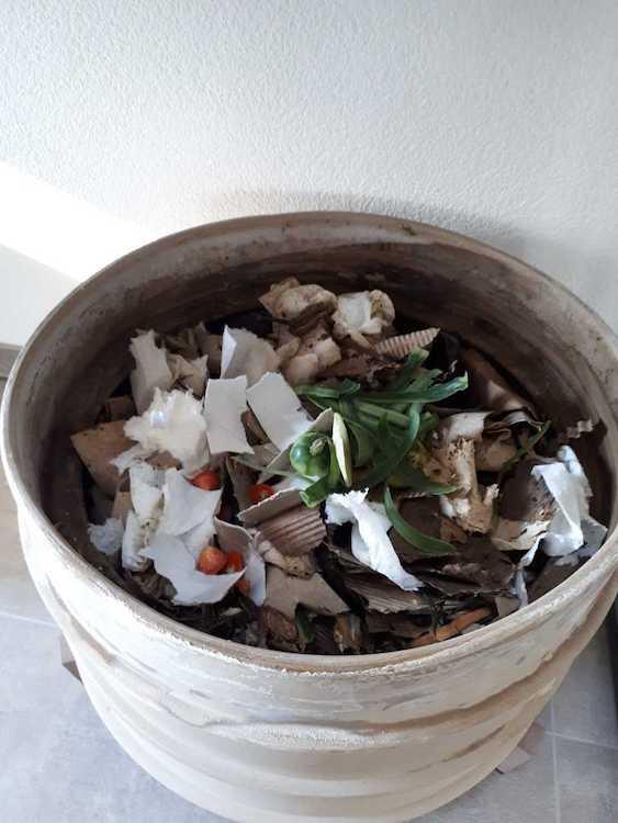 Abb. 1: Biologische Küchenabfälle im Wurmkomposter.