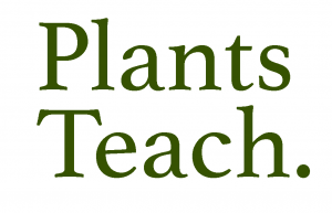 brigidsway-com-plants-teach-300x193.png