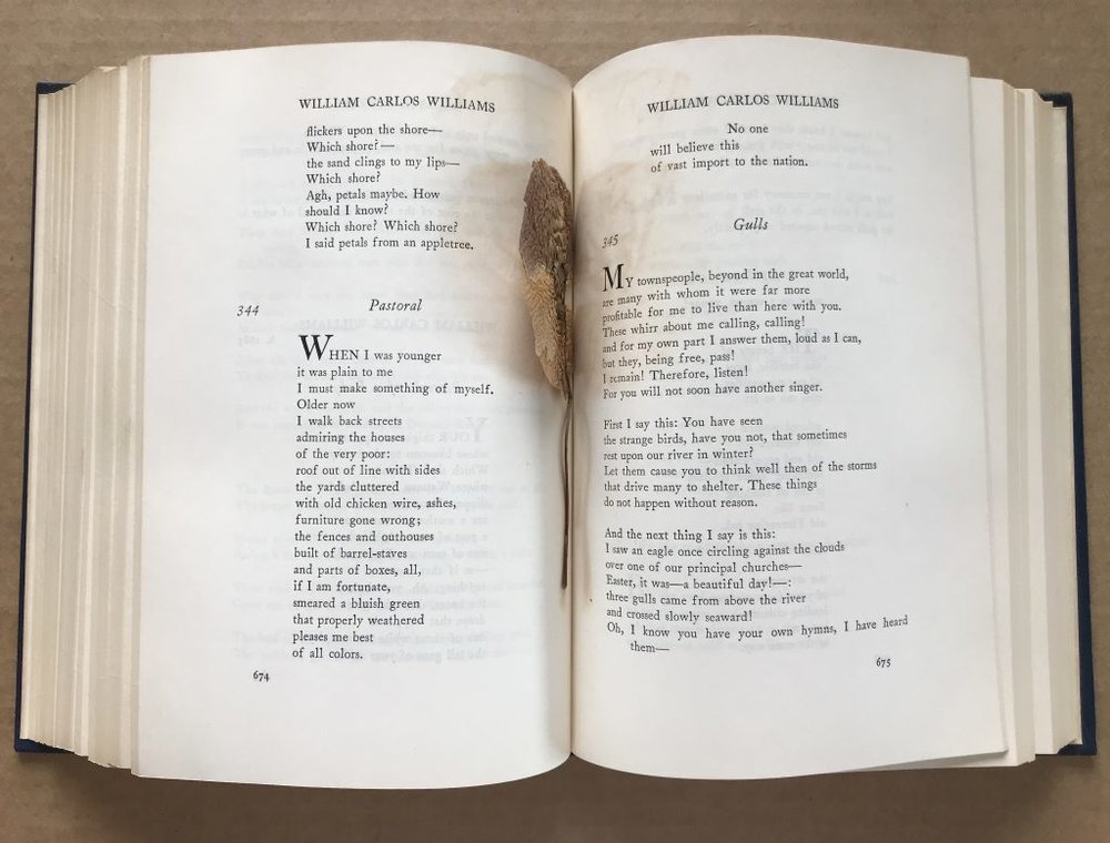John Ashbery's copy of The Oxford Book of American Verse, with pressed flowers. Courtesy of the Woodberry Poetry Room, Harvard University.