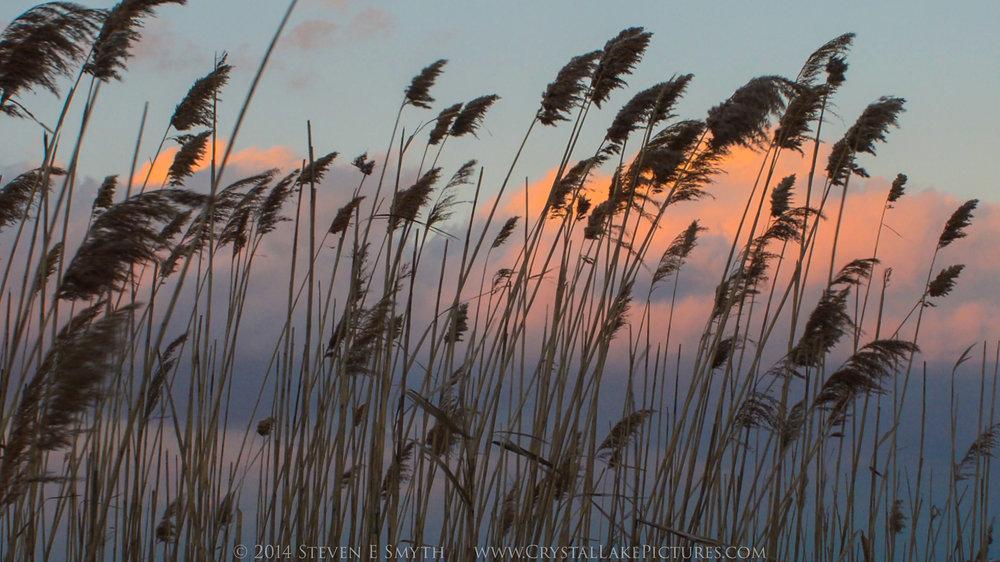 0007_2014NYE_reeds2-2.jpg
