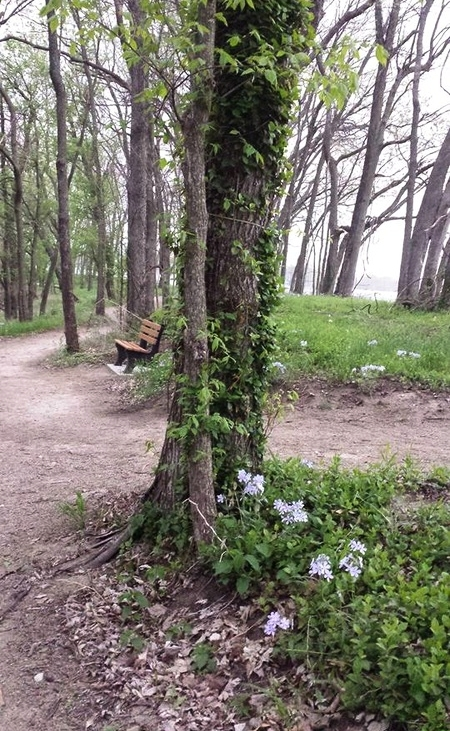 Paola_Pathways_Wallace_Park_image1