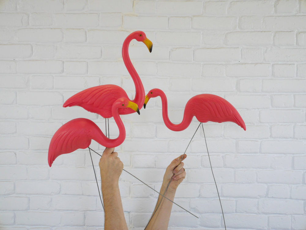 Lawn flamingos Vowed and Amazed.jpg